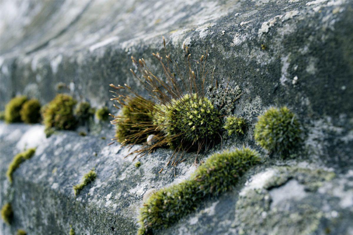 Mosaangroei op beton